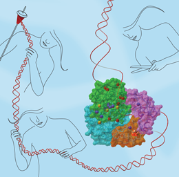 Key to als may be in DNA