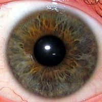 The eye's iris can reveal your state of health!